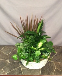 Large white basket planter from Lewis Florist in Grayslake, IL