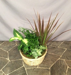 Medium Basket Planter from Lewis Florist in Grayslake, IL