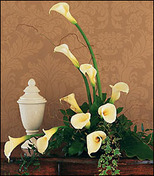 White Expressions from Lewis Florist in Grayslake, IL