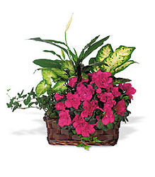 Azalea Attraction Garden Basket from Lewis Florist in Grayslake, IL