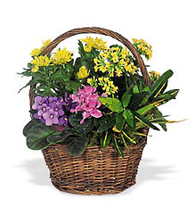 Petite European Basket from Lewis Florist in Grayslake, IL