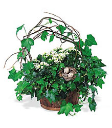 Kalanchoe and Ivy Basket from Lewis Florist in Grayslake, IL