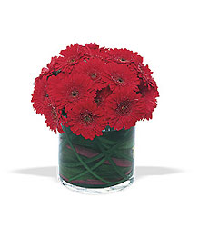 Red Gerbera Roundup from Lewis Florist in Grayslake, IL