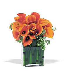Bronze Callas from Lewis Florist in Grayslake, IL
