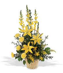 Golden Rays of Hope   from Lewis Florist in Grayslake, IL