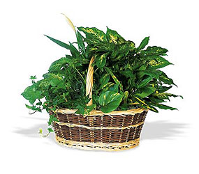 Green Planter Basket from Lewis Florist in Grayslake, IL
