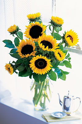 Shining Summer Sunflowers