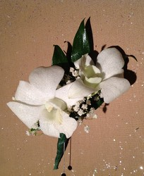 White Orchids from Lewis Florist in Grayslake, IL